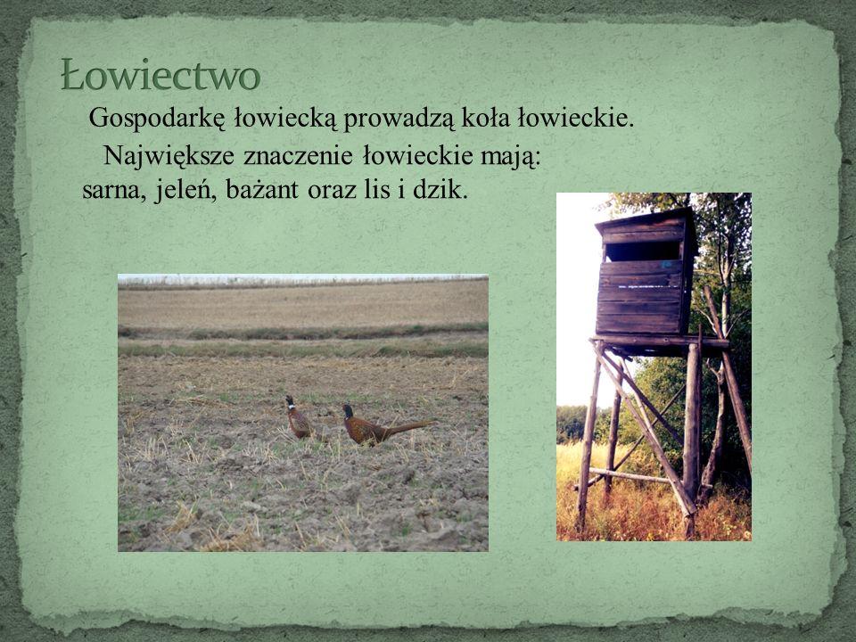 Gospodarkę łowiecką prowadzą koła łowieckie. Największe znaczenie łowieckie mają: sarna, jeleń, bażant oraz lis i dzik.