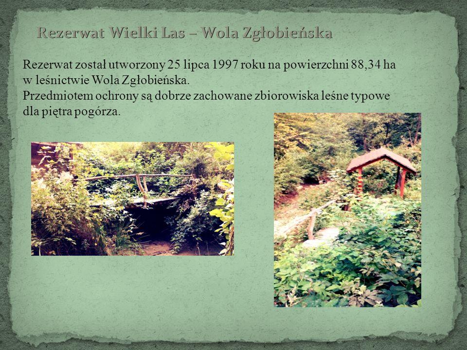 Rezerwat został utworzony 25 lipca 1997 roku na powierzchni 88,34 ha w leśnictwie Wola Zgłobieńska. Przedmiotem ochrony są dobrze zachowane zbiorowisk
