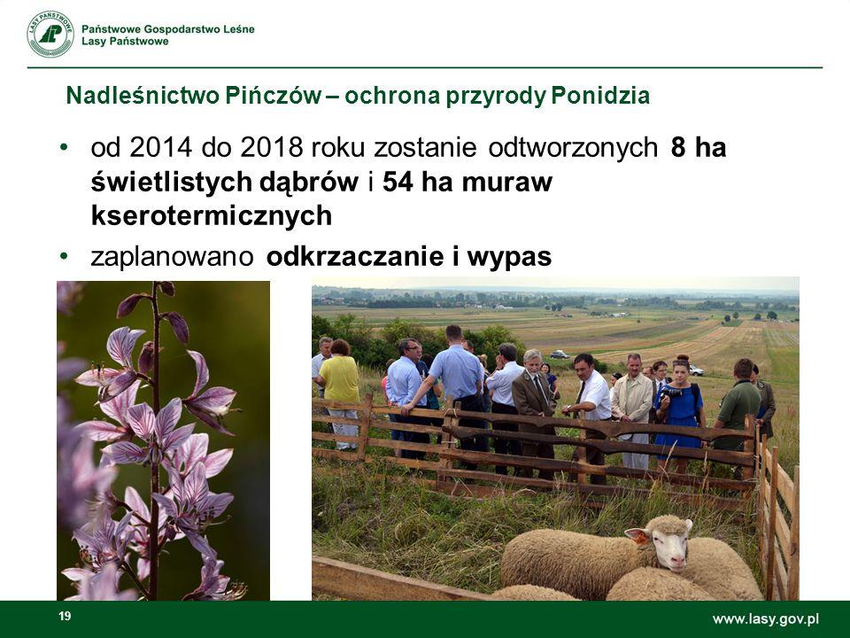 19 Nadleśnictwo Pińczów – ochrona przyrody Ponidzia od 2014 do 2018 roku zostanie odtworzonych 8 ha świetlistych dąbrów i 54 ha muraw kserotermicznych
