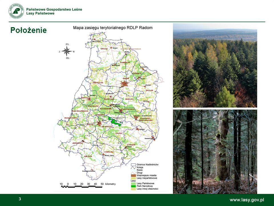 4 Powierzchnia lasów w zasięgu działania RDLP w Radomiu znajduje się 475 tys.
