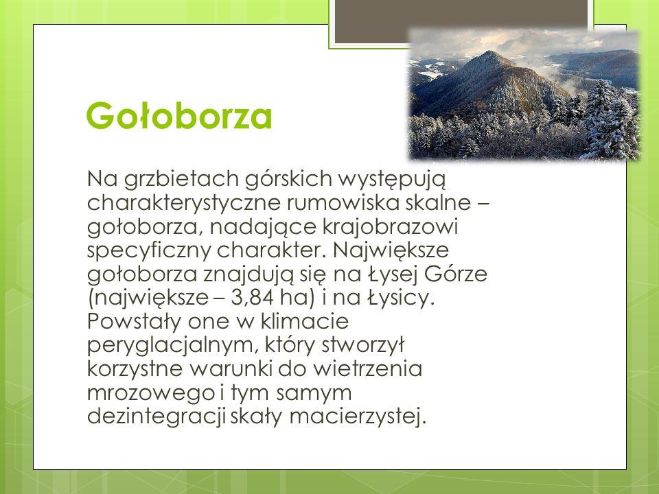 Gołoborza Na grzbietach górskich występują charakterystyczne rumowiska skalne – gołoborza, nadające krajobrazowi specyficzny charakter.