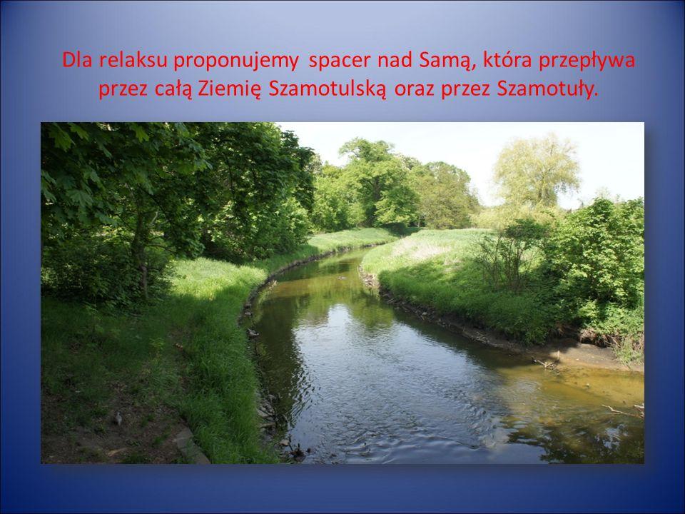 Dla relaksu proponujemy spacer nad Samą, która przepływa przez całą Ziemię Szamotulską oraz przez Szamotuły.