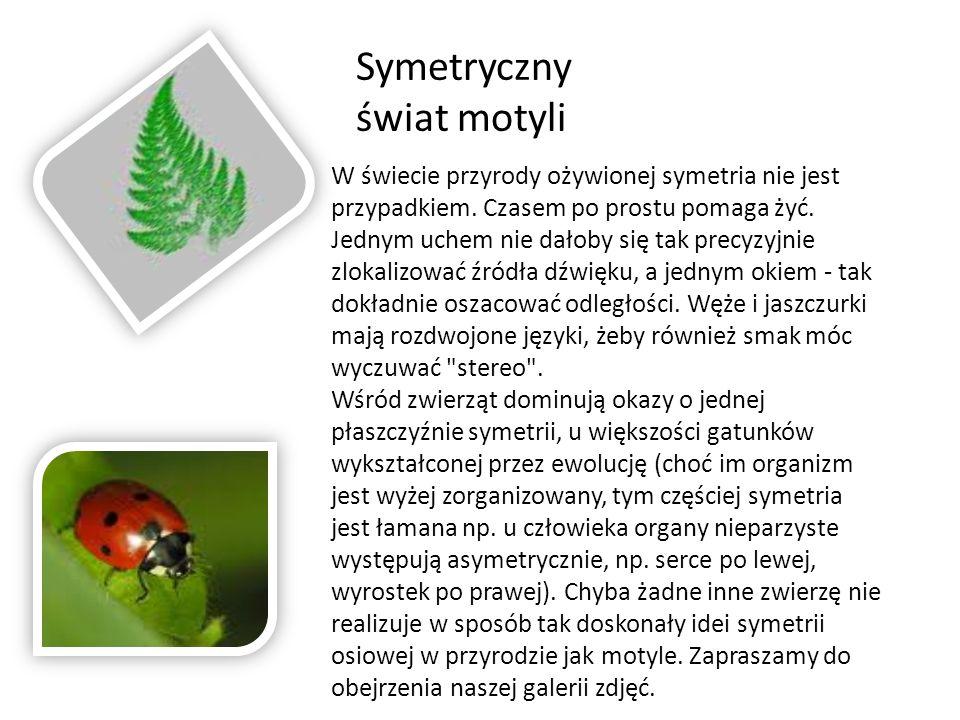 Symetryczny świat motyli W świecie przyrody ożywionej symetria nie jest przypadkiem.