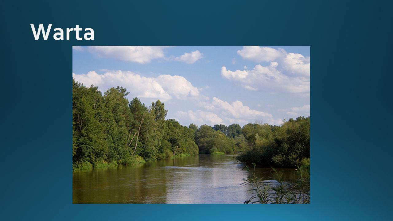 http://m-canoe.pl/upload/files/rzeki/warta.gif Trzecia pod względem długości rzeka Polski Jest to główny, prawy dopływ Odry W całości znajduje się na terytorium Polski