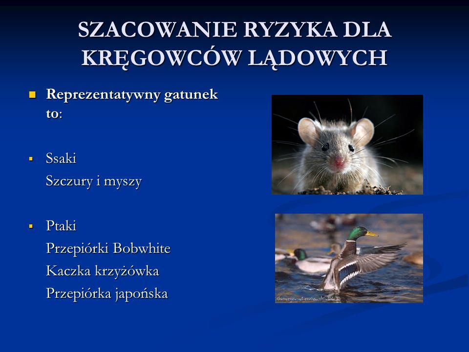 SZACOWANIE RYZYKA DLA KRĘGOWCÓW LĄDOWYCH Reprezentatywny gatunek to: Reprezentatywny gatunek to:  Ssaki Szczury i myszy  Ptaki Przepiórki Bobwhite Kaczka krzyżówka Przepiórka japońska