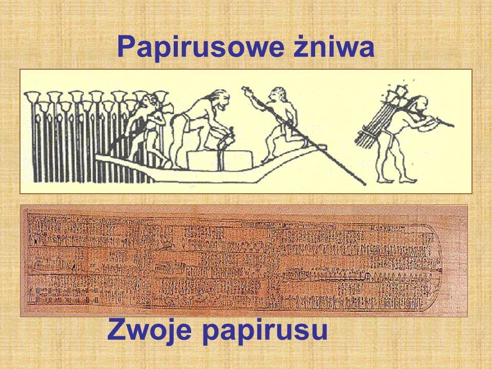 Papirusowe żniwa Zwoje papirusu