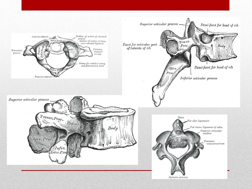 W zależności od stopnia zaawansowania dyskopatii wyróżnia się trzy okresy chorobowe: a) wypuklina krążka międzykręgowego b) przepuklina krążka międzykręgowego c) sekwestracja krążka międzykręgowego