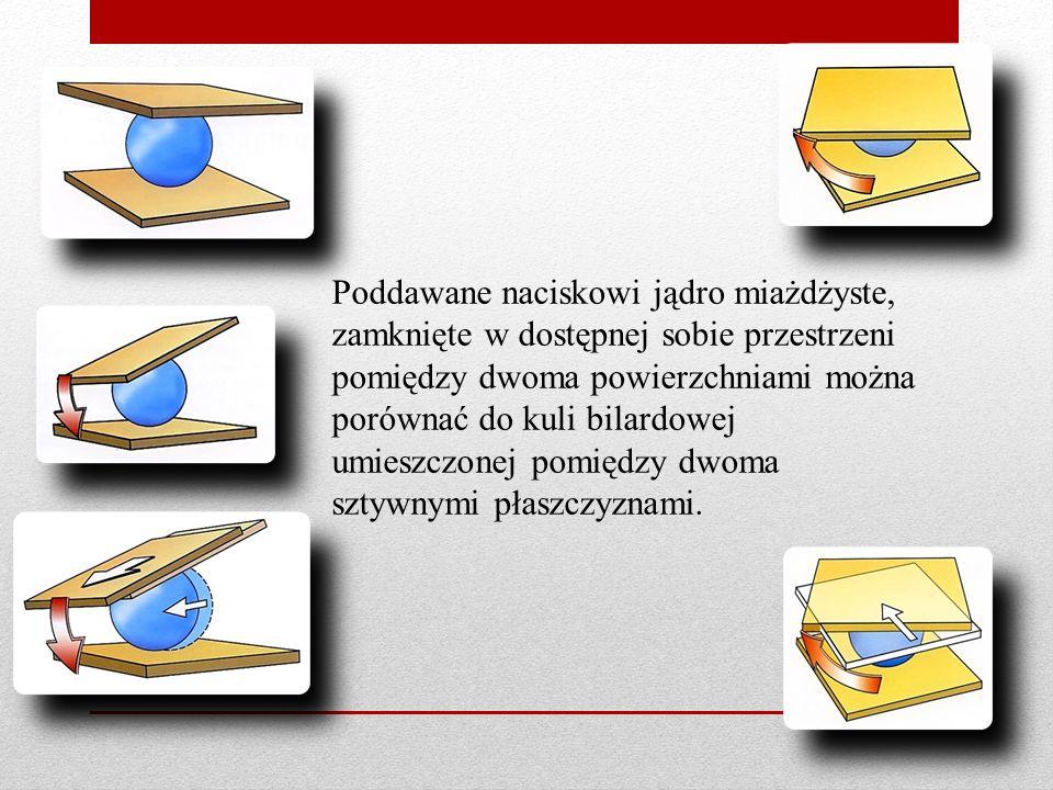 Poddawane naciskowi jądro miażdżyste, zamknięte w dostępnej sobie przestrzeni pomiędzy dwoma powierzchniami można porównać do kuli bilardowej umieszcz