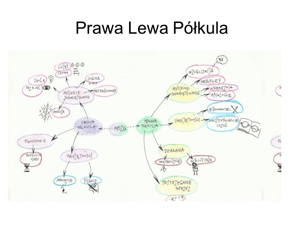 Prawa Lewa Półkula