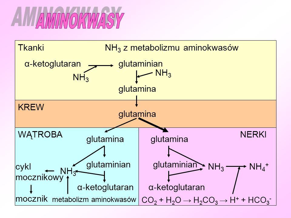 Tkanki KREW WĄTROBANERKI NH 3 z metabolizmu aminokwasów α-ketoglutaran glutaminian glutamina NH 4 + NH 3 CO 2 + H 2 O → H 2 CO 3 → H + + HCO 3 - cykl mocznikowy mocznik metabolizm aminokwasów