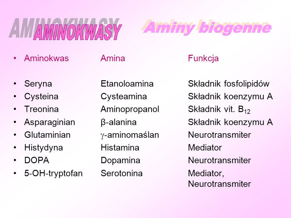 AminokwasAminaFunkcja SerynaEtanoloaminaSkładnik fosfolipidów CysteinaCysteaminaSkładnik koenzymu A TreoninaAminopropanolSkładnik vit.