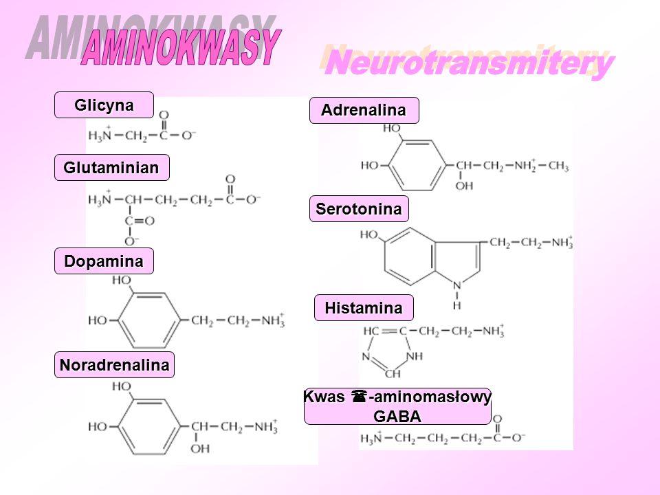 Glicyna Glutaminian Dopamina Noradrenalina Adrenalina Serotonina Histamina Kwas  -aminomasłowy GABA