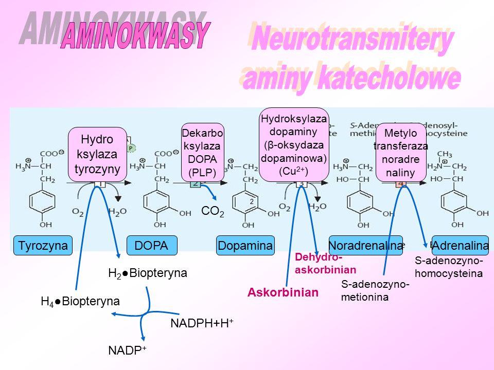 Hydro ksylaza tyrozyny Metylo transferaza noradre naliny Hydroksylaza dopaminy (β-oksydaza dopaminowa) (Cu 2+ ) Dekarbo ksylaza DOPA (PLP) TyrozynaDOPA DopaminaNoradrenalina Adrenalina H 4 ●Biopteryna H 2 ●Biopteryna CO 2 2 S-adenozyno- metionina S-adenozyno- homocysteina NADPH+H + NADP + Askorbinian Dehydro- askorbinian