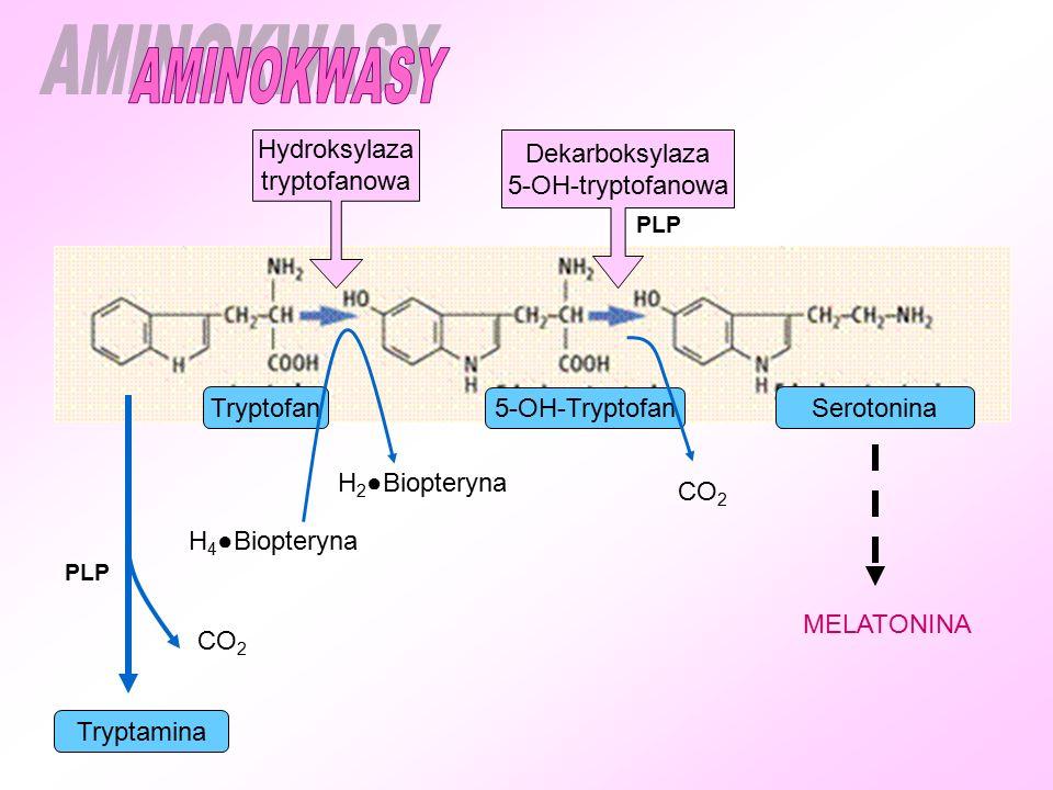 TryptofanSerotonina 5-OH-Tryptofan Hydroksylaza tryptofanowa Dekarboksylaza 5-OH-tryptofanowa H 4 ●Biopteryna H 2 ●Biopteryna CO 2 PLP MELATONINA CO 2 Tryptamina PLP