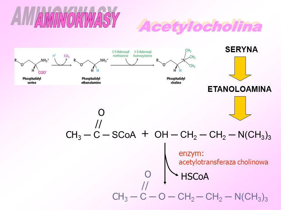 O // CH 3 ─ C ─ SCoA + OH ─ CH 2 ─ CH 2 ─ N(CH 3 ) 3 HSCoA O // CH 3 ─ C ─ O ─ CH 2 ─ CH 2 ─ N(CH 3 ) 3 enzym: acetylotransferaza cholinowa ETANOLOAMINA SERYNA