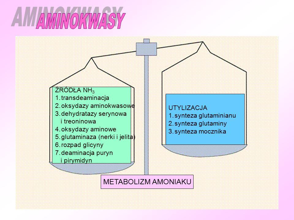 ŹRÓDŁA NH 3 1.transdeaminacja 2.oksydazy aminokwasowe 3.dehydratazy serynowa i treoninowa 4.oksydazy aminowe 5.glutaminaza (nerki i jelita) 6.rozpad glicyny 7.deaminacja puryn i pirymidyn UTYLIZACJA 1.synteza glutaminianu 2.synteza glutaminy 3.synteza mocznika METABOLIZM AMONIAKU