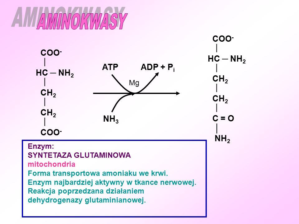 COO -  HC ─ NH 2  CH 2  CH 2  COO - Enzym: SYNTETAZA GLUTAMINOWA mitochondria Forma transportowa amoniaku we krwi.