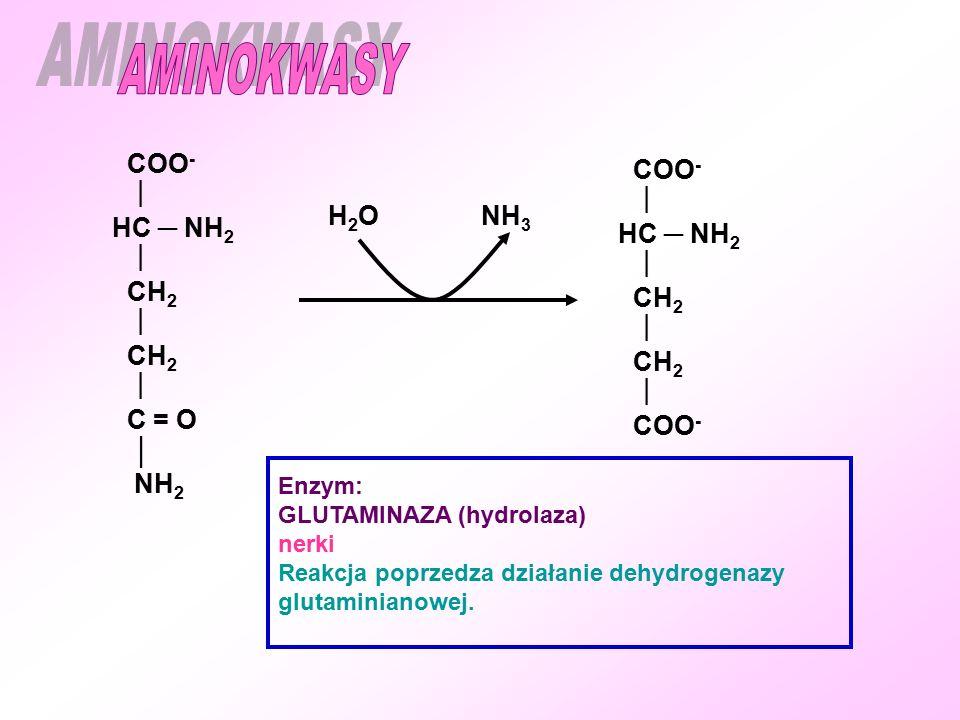 COO -  HC ─ NH 2  CH 2  CH 2  COO - Enzym: GLUTAMINAZA (hydrolaza) nerki Reakcja poprzedza działanie dehydrogenazy glutaminianowej.