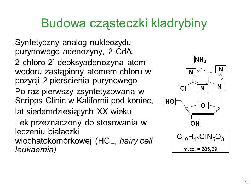 20 Budowa cząsteczki kladrybiny Syntetyczny analog nukleozydu purynowego adenozyny, 2-CdA, 2-chloro-2'-deoksyadenozyna atom wodoru zastąpiony atomem chloru w pozycji 2 pierścienia purynowego Po raz pierwszy zsyntetyzowana w Scripps Clinic w Kalifornii pod koniec, lat siedemdziesiątych XX wieku Lek przeznaczony do stosowania w leczeniu białaczki włochatokomórkowej (HCL, hairy cell leukaemia) C 10 H 12 CIN 5 O 3 m.cz.