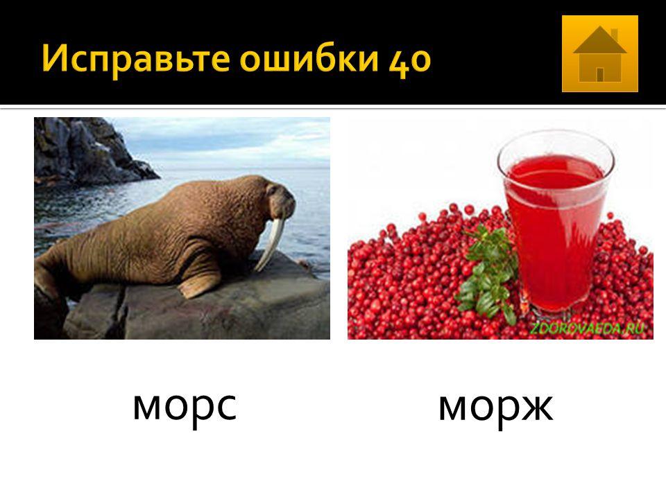 морс морж