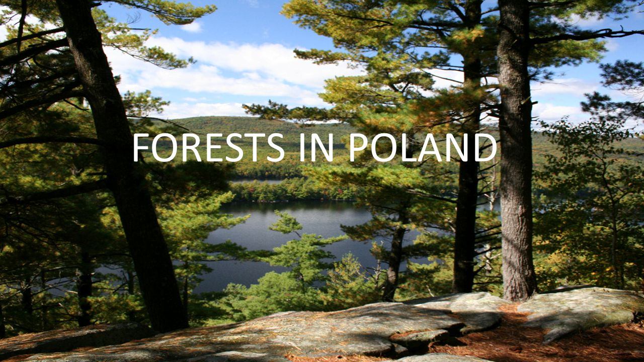 THE AREA OF FORESTS IN POLAND Forests in Poland grow on 9 million hectares, which cover more than 28% of the country.