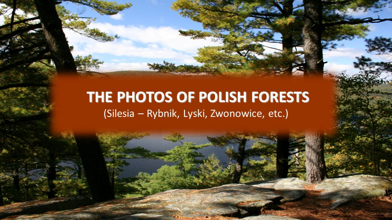 THE PHOTOS OF POLISH FORESTS THE PHOTOS OF POLISH FORESTS (Silesia – Rybnik, Lyski, Zwonowice, etc.)