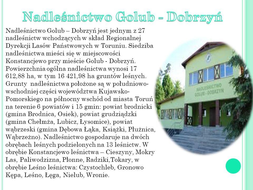 Nadleśnictwo Golub – Dobrzyń jest jednym z 27 nadleśnictw wchodzących w skład Regionalnej Dyrekcji Lasów Państwowych w Toruniu. Siedziba nadleśnictwa