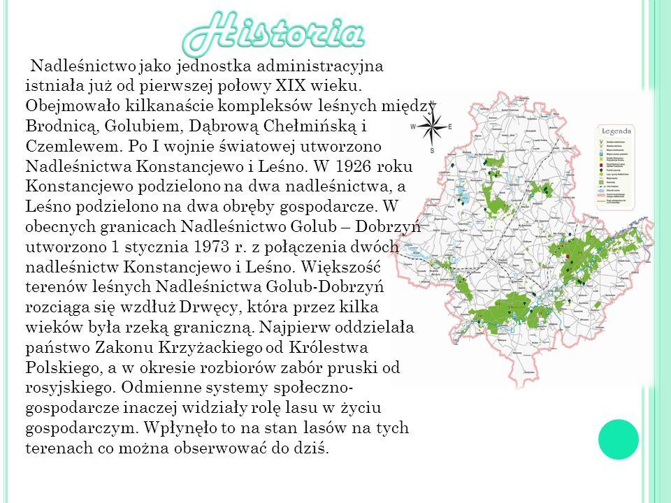 Nadleśnictwo jako jednostka administracyjna istniała już od pierwszej połowy XIX wieku. Obejmowało kilkanaście kompleksów leśnych między Brodnicą, Gol