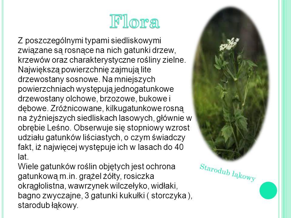 Z poszczególnymi typami siedliskowymi związane są rosnące na nich gatunki drzew, krzewów oraz charakterystyczne rośliny zielne.