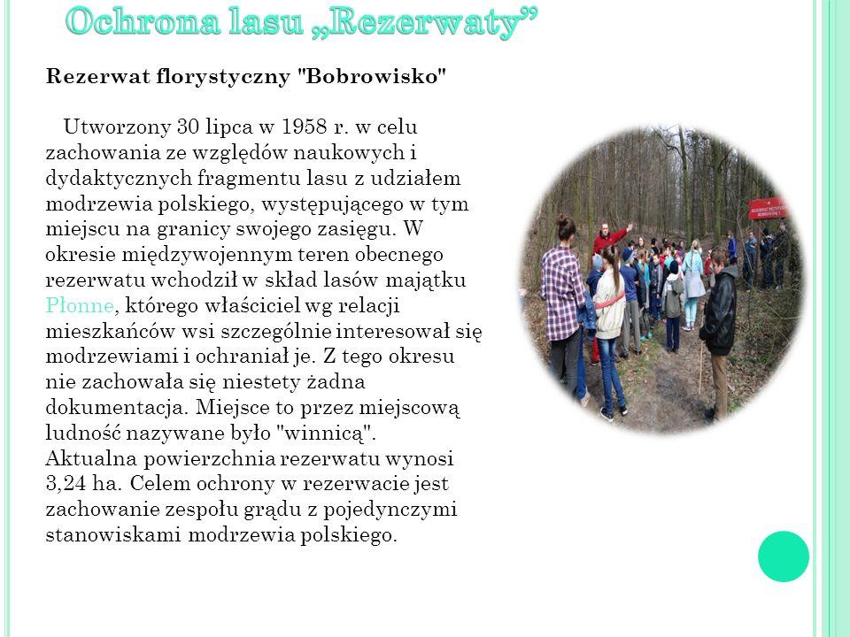 Znajdujące się w leśnictwie Płonne skupienie drzew Góra Modrzewiowa , zajmujące pow.