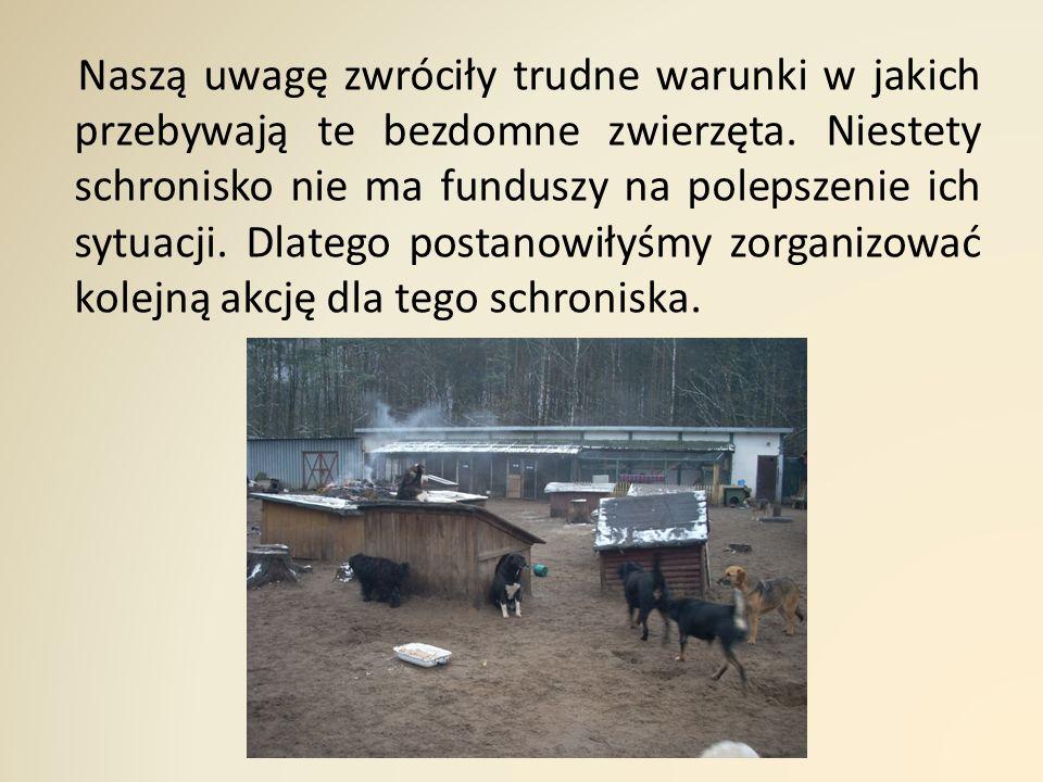 Naszą uwagę zwróciły trudne warunki w jakich przebywają te bezdomne zwierzęta.