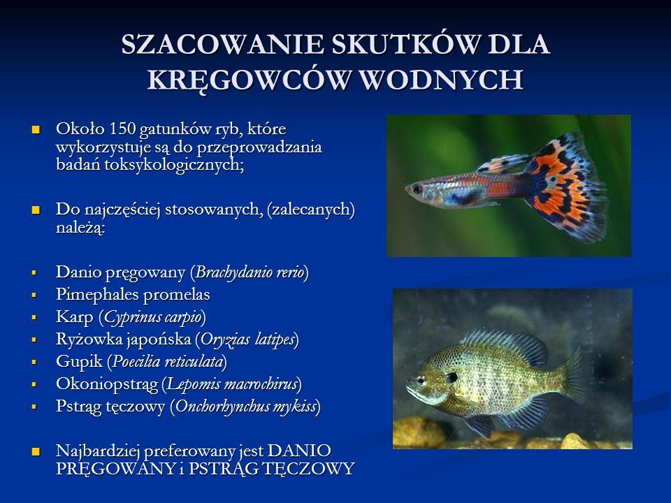 SZACOWANIE SKUTKÓW DLA KRĘGOWCÓW WODNYCH Około 150 gatunków ryb, które wykorzystuje są do przeprowadzania badań toksykologicznych; Około 150 gatunków ryb, które wykorzystuje są do przeprowadzania badań toksykologicznych; Do najczęściej stosowanych, (zalecanych) należą: Do najczęściej stosowanych, (zalecanych) należą:  Danio pręgowany (Brachydanio rerio)  Pimephales promelas  Karp (Cyprinus carpio)  Ryżowka japońska (Oryzias latipes)  Gupik (Poecilia reticulata)  Okoniopstrąg (Lepomis macrochirus)  Pstrąg tęczowy (Onchorhynchus mykiss) Najbardziej preferowany jest DANIO PRĘGOWANY i PSTRĄG TĘCZOWY Najbardziej preferowany jest DANIO PRĘGOWANY i PSTRĄG TĘCZOWY