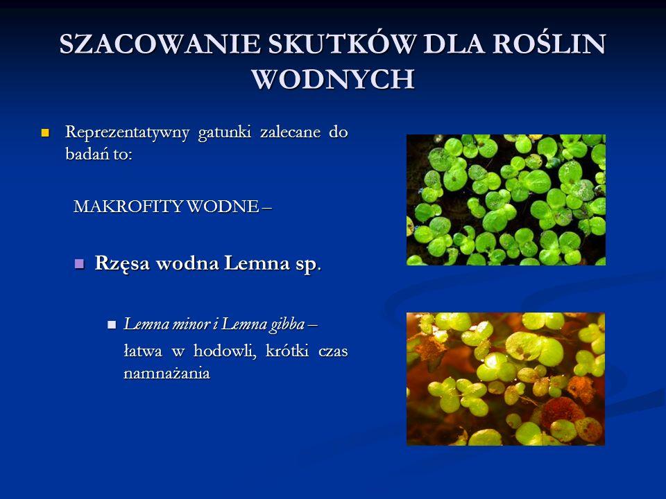 SZACOWANIE SKUTKÓW DLA ROŚLIN WODNYCH Reprezentatywny gatunki zalecane do badań to: Reprezentatywny gatunki zalecane do badań to: MAKROFITY WODNE – Rzęsa wodna Lemna sp.