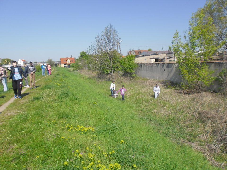 Park Miejski w Śremie Uczniowie wykonują czynności porządkowe: pielęgnują zieleń grabią liście.