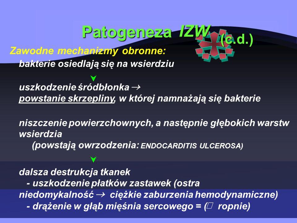 Patogeneza IZW Zawodne mechanizmy obronne: (c.d.) bakterie osiedlają się na wsierdziu uszkodzenie śródbłonka powstanie skrzepliny, w której namnażają się bakterie niszczenie powierzchownych, a następnie głębokich warstw wsierdzia (powstają owrzodzenia: ENDOCARDITIS ULCEROSA) dalsza destrukcja tkanek - uszkodzenie płatków zastawek (ostra niedomykalność ciężkie zaburzenia hemodynamiczne) - drążenie w głąb mięśnia sercowego = (  ropnie)  