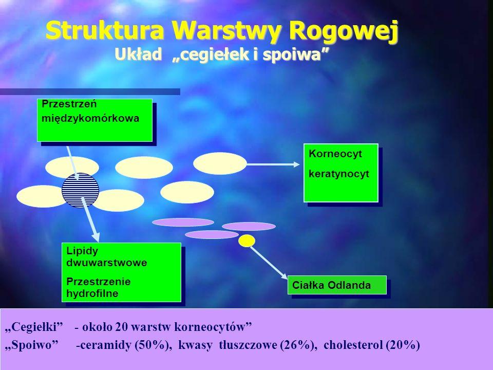 Korneocyt keratynocyt Korneocyt keratynocyt Przestrzeń międzykomórkowa Przestrzeń międzykomórkowa Lipidy dwuwarstwowe Przestrzenie hydrofilne Lipidy d
