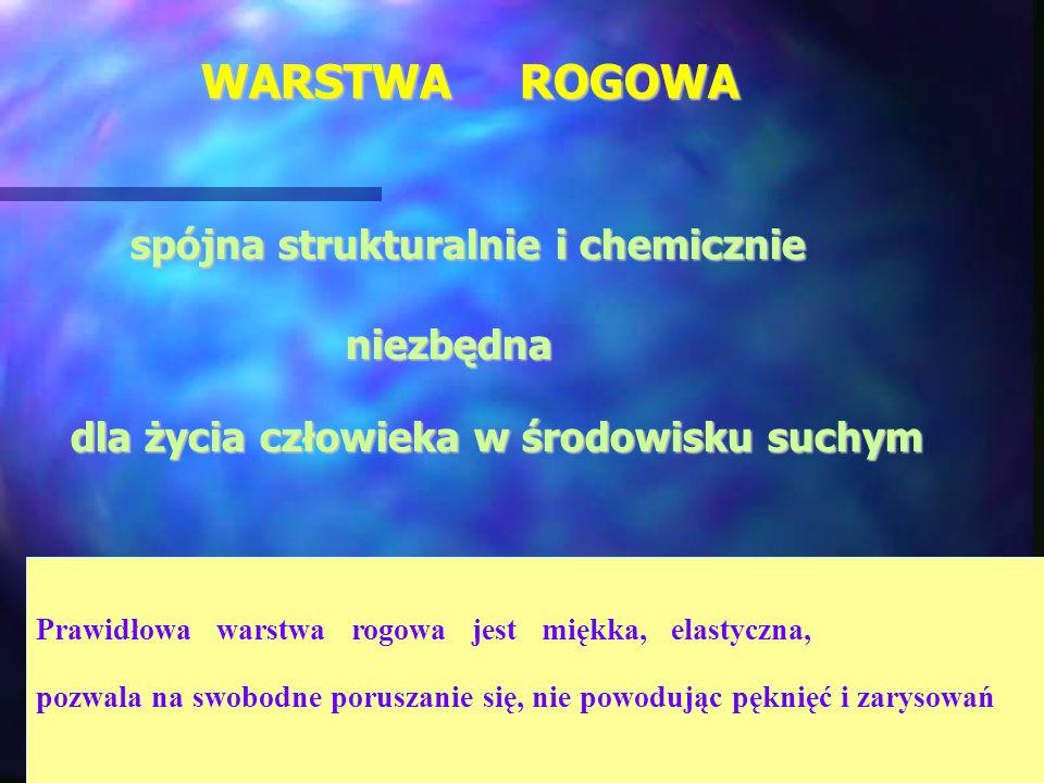 WARSTWA ROGOWA spójna strukturalnie i chemicznie spójna strukturalnie i chemicznie niezbędna niezbędna dla życia człowieka w środowisku suchym dla życ