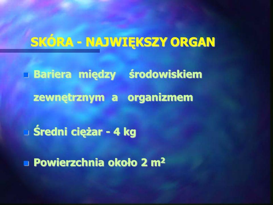 SKÓRA - NAJWIĘKSZY ORGAN Bariera między środowiskiem zewnętrznym a organizmem Bariera między środowiskiem zewnętrznym a organizmem Średni ciężar - 4 k