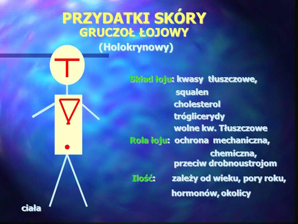 PRZYDATKI SKÓRY GRUCZOŁ ŁOJOWY (Holokrynowy) Skład łoju: kwasy tłuszczowe, Skład łoju: kwasy tłuszczowe, squalen squalen cholesterol cholesterol trógl