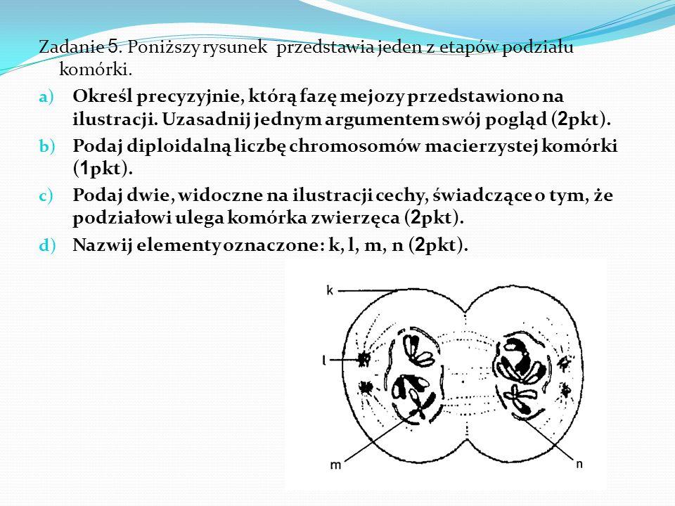 Zadanie 5.Poniższy rysunek przedstawia jeden z etapów podziału komórki.