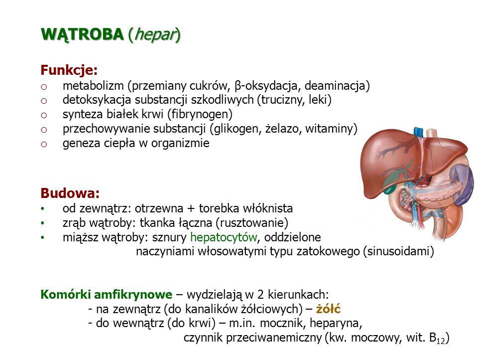 WĄTROBA (hepar) Funkcje: o metabolizm (przemiany cukrów, β-oksydacja, deaminacja) o detoksykacja substancji szkodliwych (trucizny, leki) o synteza bia