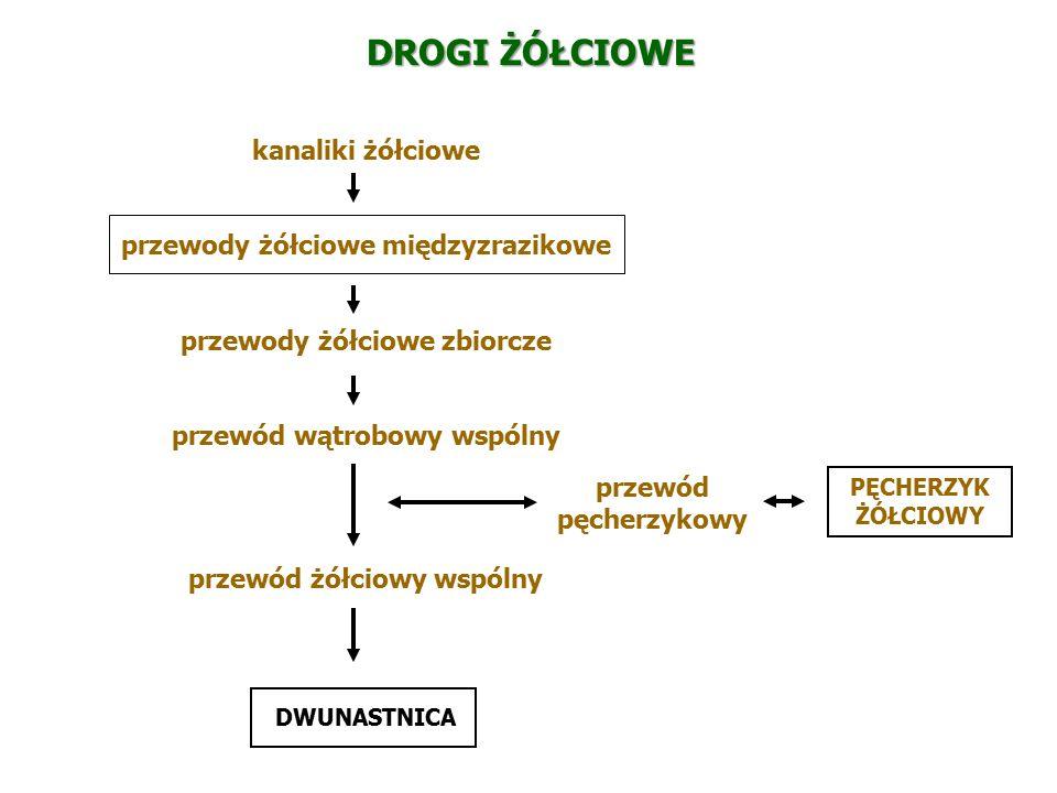 Tarczyca glandula thyreoidea Tyrozyna + jod Tyroksyna + trójjodotyronina Pęcherzykowe kom.