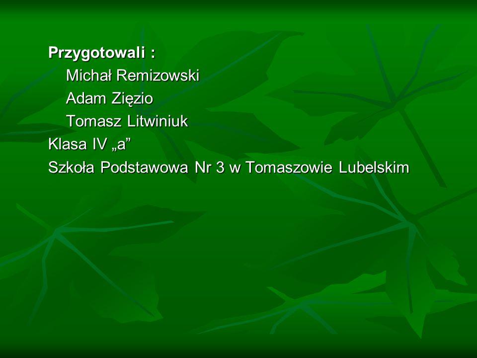 """Przygotowali : Michał Remizowski Adam Zięzio Tomasz Litwiniuk Klasa IV """"a Szkoła Podstawowa Nr 3 w Tomaszowie Lubelskim"""