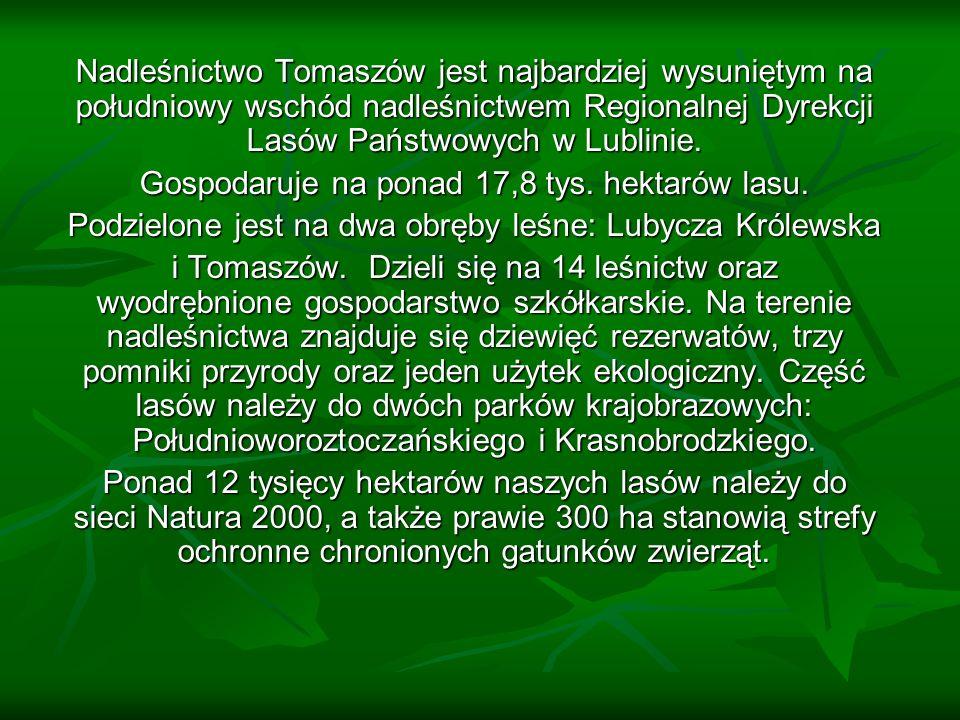 Nadleśnictwo Tomaszów jest najbardziej wysuniętym na południowy wschód nadleśnictwem Regionalnej Dyrekcji Lasów Państwowych w Lublinie.