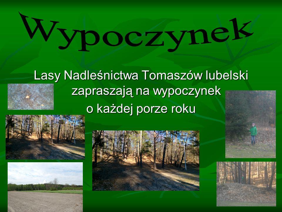 Lasy Nadleśnictwa Tomaszów lubelski zapraszają na wypoczynek o każdej porze roku