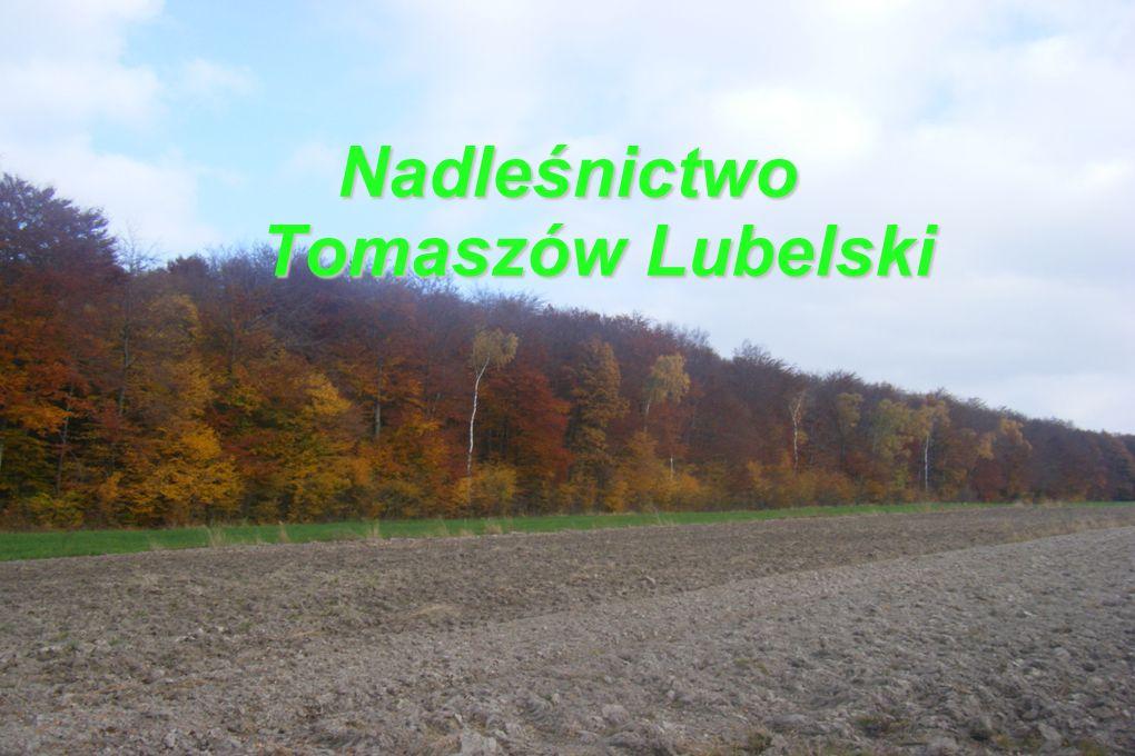 Nadleśnictwo Tomaszów Lubelski