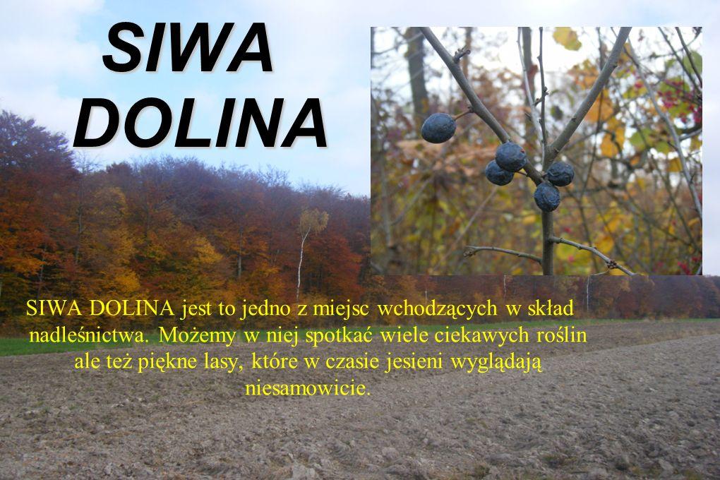 SIWA DOLINA SIWA DOLINA jest to jedno z miejsc wchodzących w skład nadleśnictwa.