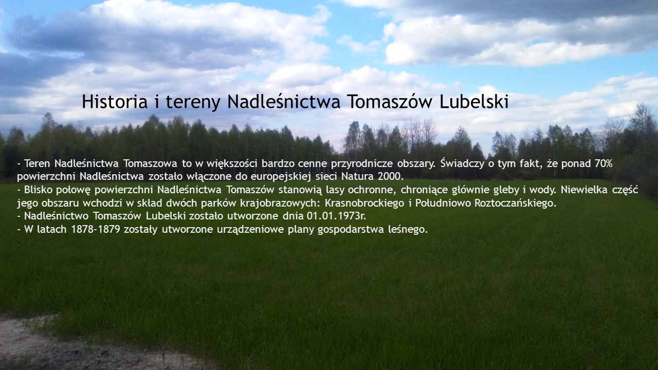 Historia i tereny Nadleśnictwa Tomaszów Lubelski - Teren Nadleśnictwa Tomaszowa to w większości bardzo cenne przyrodnicze obszary. Świadczy o tym fakt