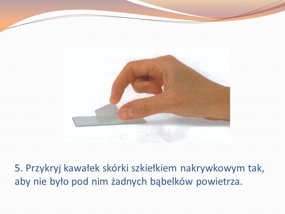 5. Przykryj kawałek skórki szkiełkiem nakrywkowym tak, aby nie było pod nim żadnych bąbelków powietrza.