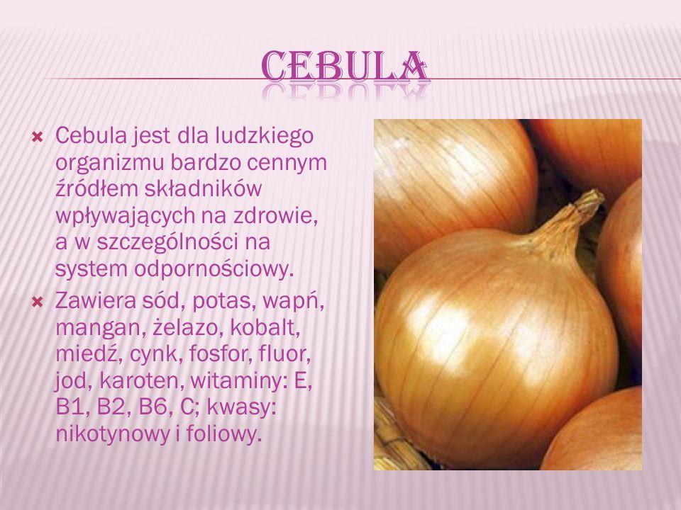  Cebula jest dla ludzkiego organizmu bardzo cennym źródłem składników wpływających na zdrowie, a w szczególności na system odpornościowy.
